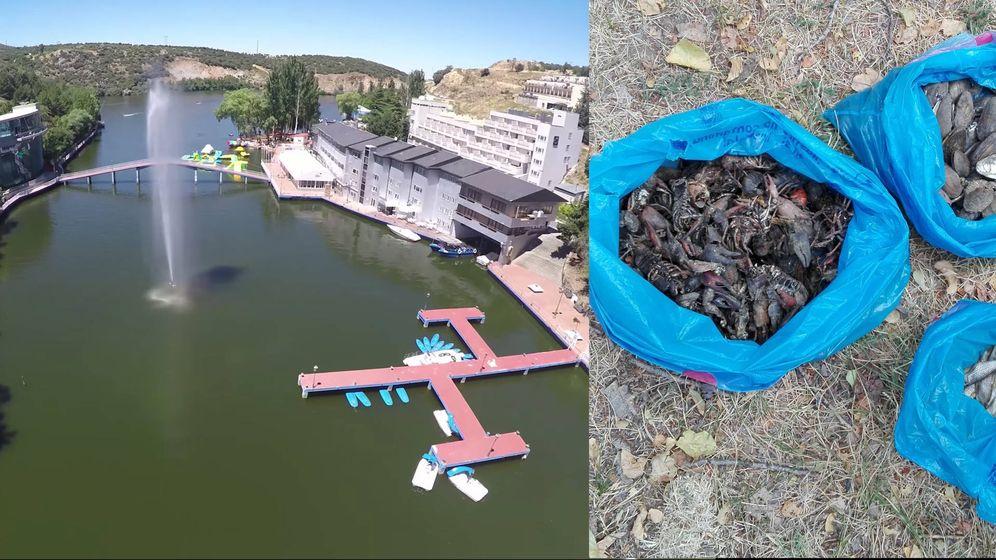 Foto: A la izquierda el embalse recreativo de Los Ángeles de San Rafael, a la derecha sacos de crustáceos muertos.