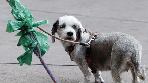 Zamora impone el 'impuesto al perro': sus dueños deberán pagar 9 euros al año