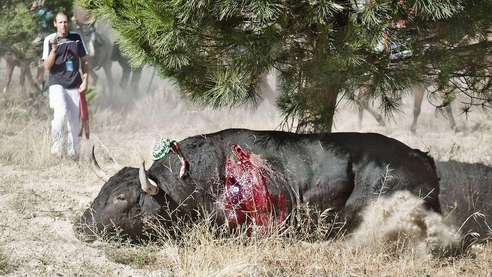 Por qué los animales sí sufren y sienten dolor