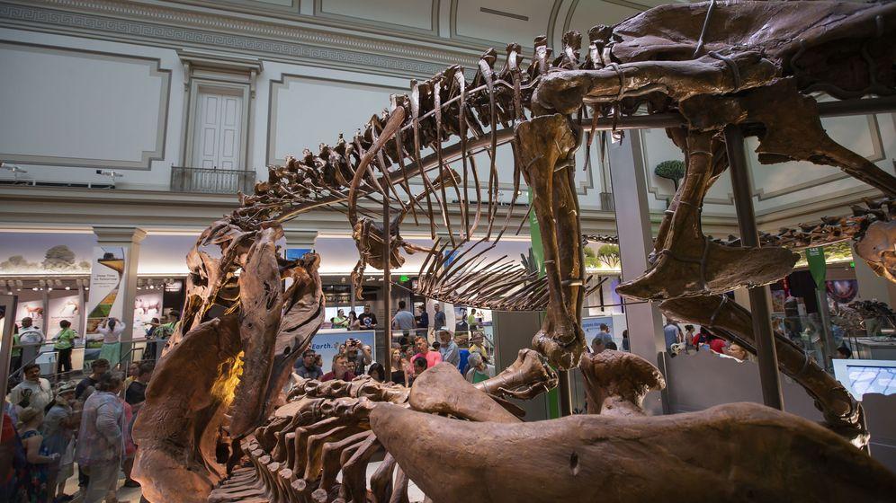 Foto: Esqueleto de un Tyrannosaurus en el Smithsonian. (EFE)