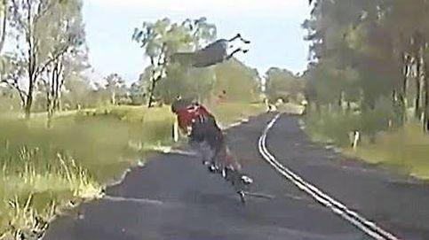 Un canguro 'placa' a un ciclista en Australia