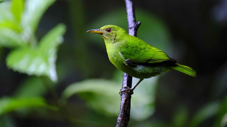 El derecho a un medio ambiente sano incluye a la biodiversidad del planeta (EFE)