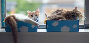 Post de El gato de Schrödinger está vivo, muerto y en dos sitios al mismo tiempo