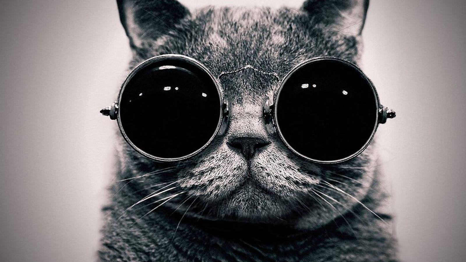 Foto: El gato de Schroedinger
