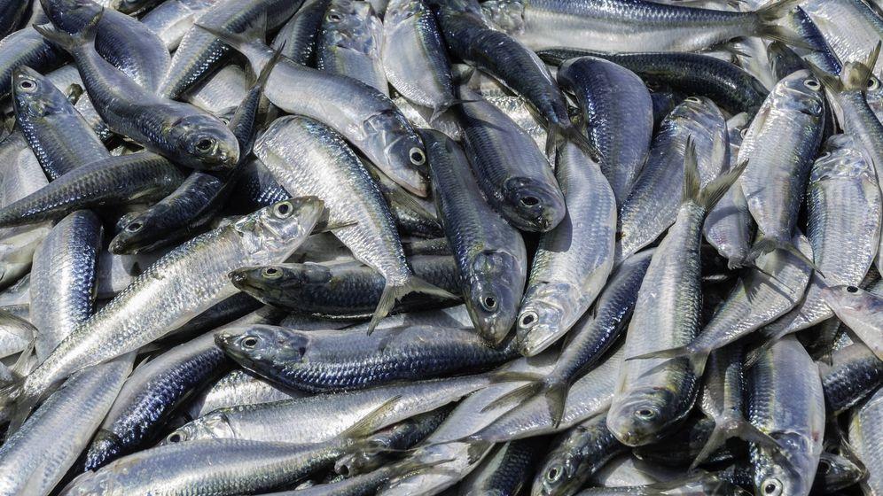 Foto: Pescado azul (iStock)