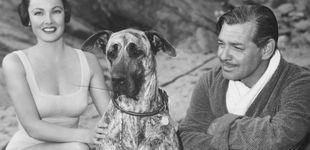 Post de Gene Tierney: el triste final en Hollywood de 'la mujer más bella del mundo'