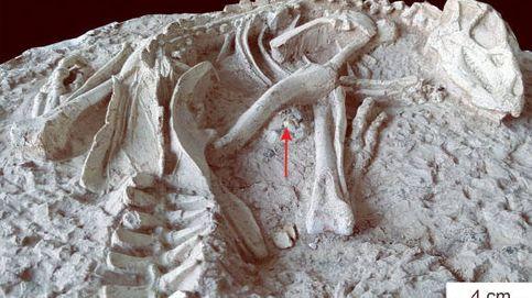 Descubren una nueva especie de dinosaurio en China