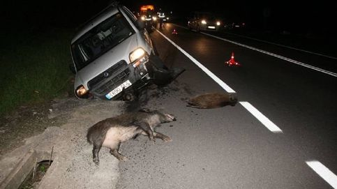 En la A-1, con un jabalí, domingo noche: así son los accidentes causados por animales