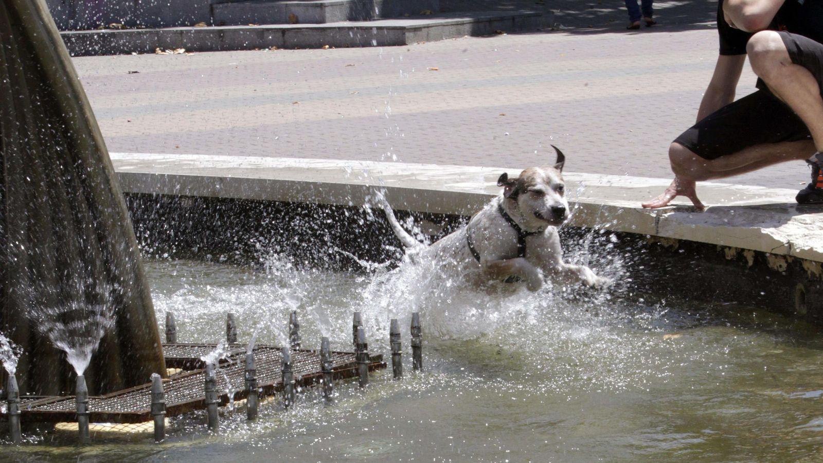 Foto: Los perros, 'vecinos no humanos' de Trigueros del Valle (EFE)