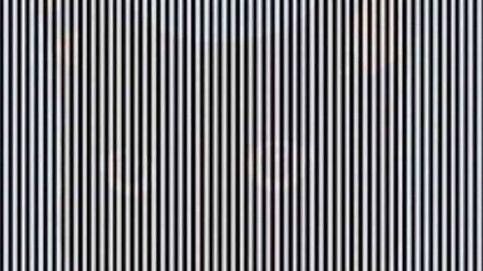 ¿Puedes ver el animal escondido en esta imagen? No es tan difícil