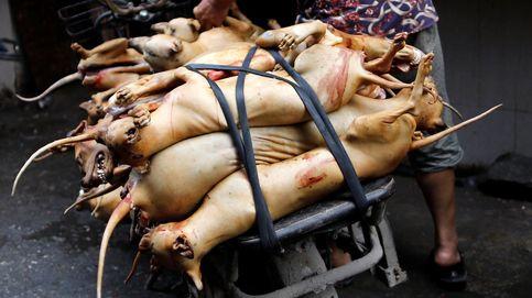 China celebra el festival de la carne de perro: atención, imágenes sensibles