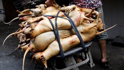 China celebra su tradicional festival de carne de perro a pesar de la alerta sanitaria