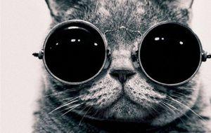 Los gatos más famosos de Internet