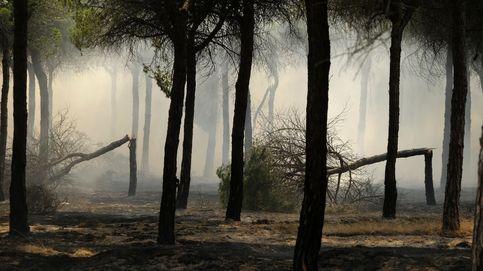 No, la Ley de Montes no deja recalificar Doñana (y otros bulos desmontados)