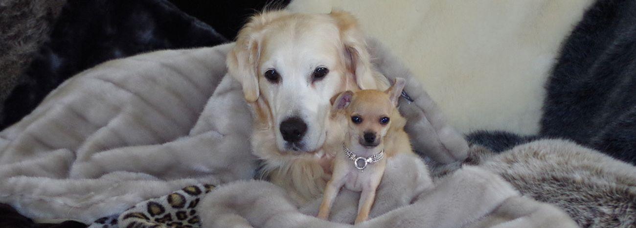 Los mejores accesorios para mascotas de lujo for Accesorios para mascotas