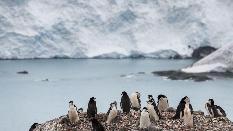 Nuevo récord de temperatura en la Antártida: 20 grados y menos hielo