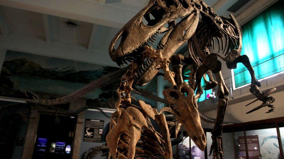 Foto: Imagen de archivo del Museo Argentino de Ciencias Naturales Bernardino Rivadavia, de Buenos Aires. (EFE)