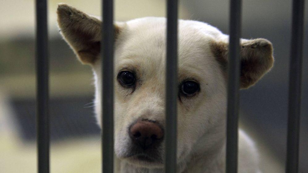 Foto: La adopción de mascotas en vez de comprarlas es una larga reivindicación de los refugios de animales (Foto: Reuters)