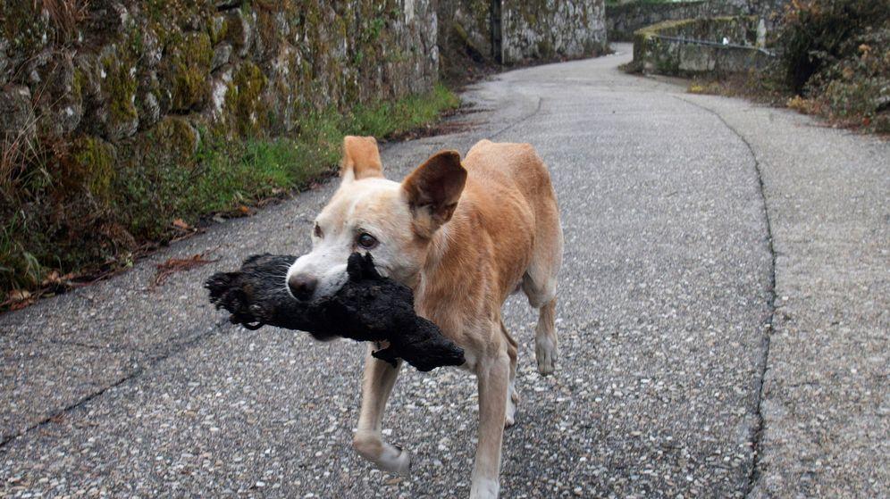 Foto: Una perrita lleva el cadáver calcinado de su cría (EFE/Salvador Sas)