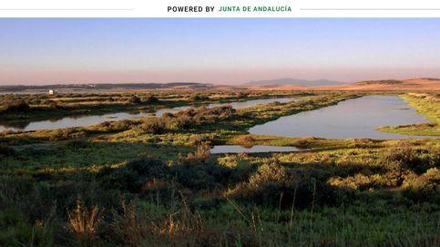 Andalucía confía en la 'revolución verde' para generar 20.000 empleos