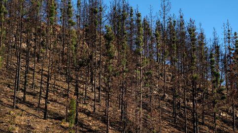 Prohibidos los fuegos artificiales y las barbacoas en Gran Canaria hasta otoño