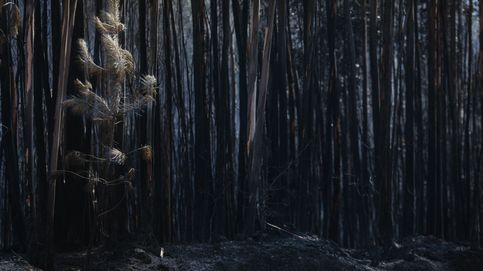España, vulnerable a incendios trágicos como el de Portugal