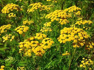 Foto: El 12% de la población usa plantas medicinales para adelgazar