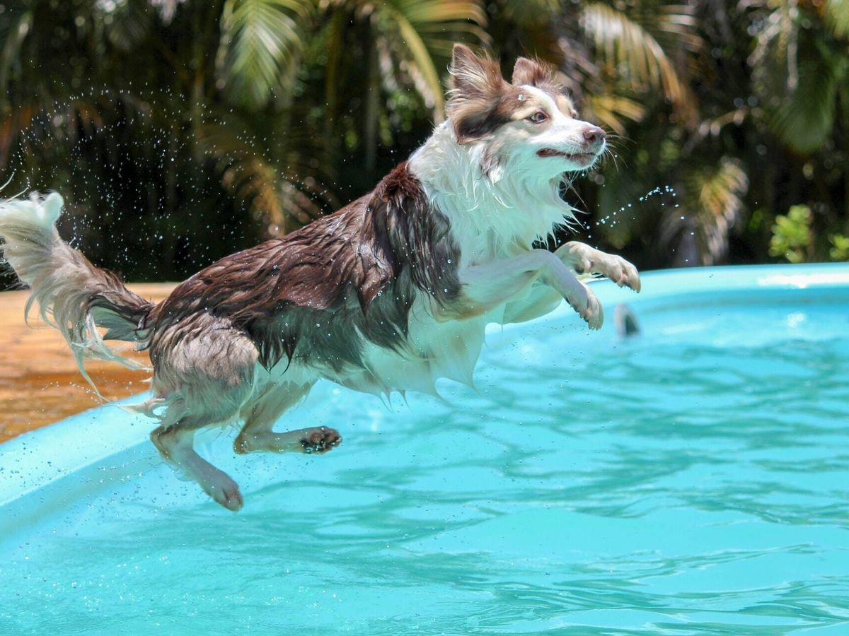 Foto: A medida que avanza el vídeo, puede verse cómo el perro comienza a correr y se lanza al agua (Unsplash)