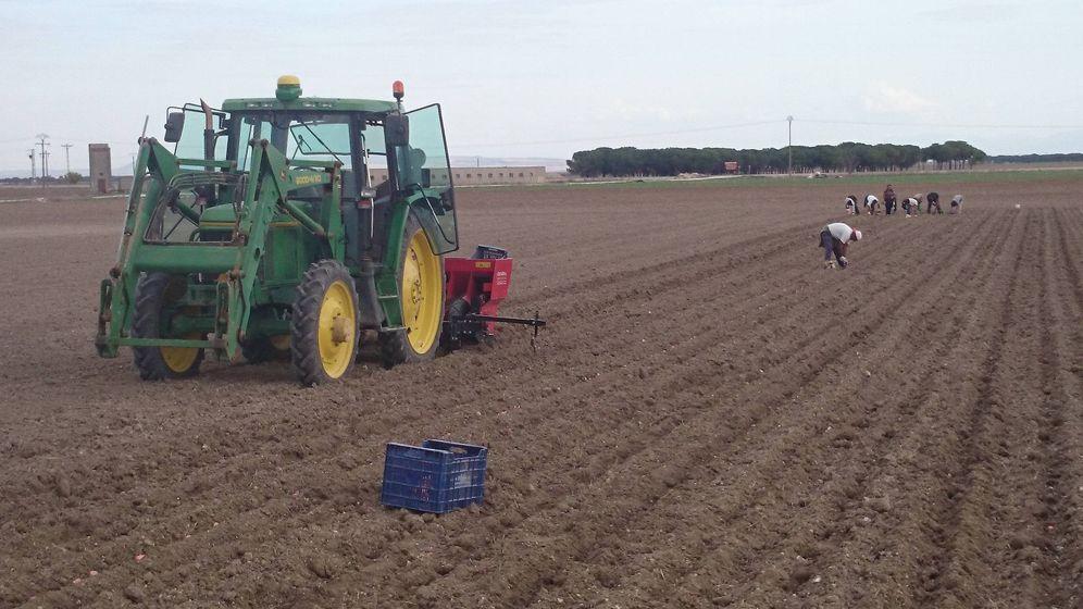 Foto: Los agricultores españoles contratan a búlgaros, senegaleses o marroquíes a través de ETTs. (David García)