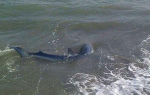 Un tiburón de más de dos metros obliga a cerrar Sotogrande