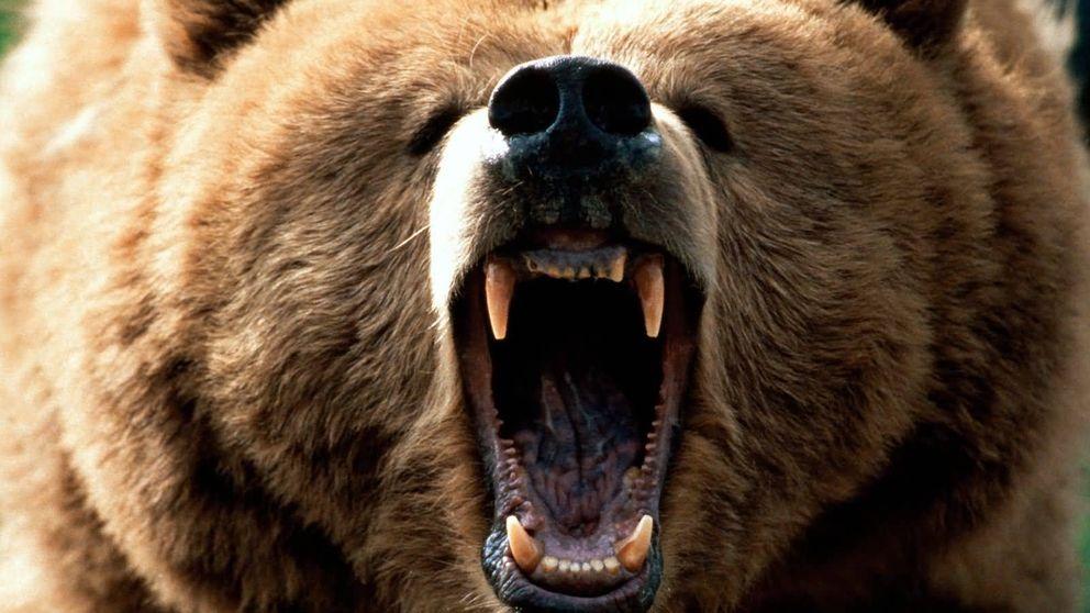 Cómo evitar el ataque de los animales más peligrosos del mundo
