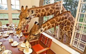 La extinción silenciosa de las jirafas: el 40% ha desaparecido