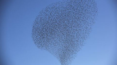 Cómo deciden las aves migratorias dónde parar a 'repostar'