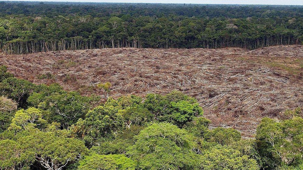 Resultado de imagen de foto amazonia