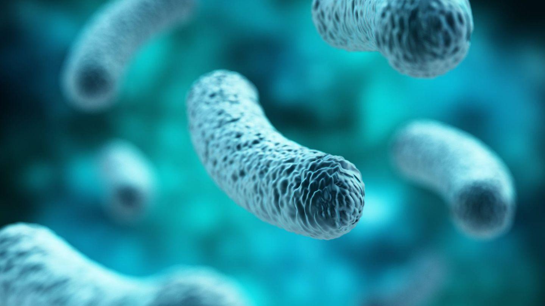 Lactobacillus. (iStock)