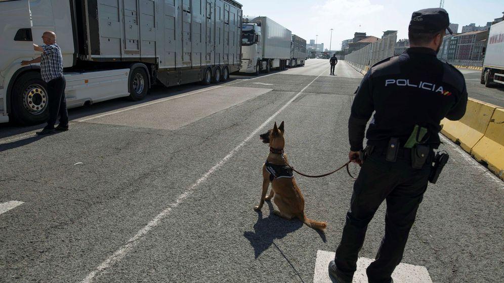Foto: El olfato para la lucha contra los polizones (Efe)