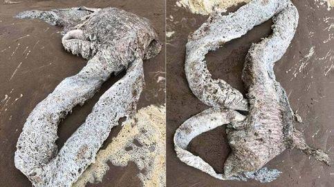 Un extraño animal de más de tres metros aparece en una playa de Reino Unido