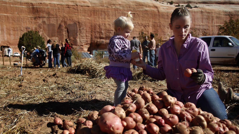 Suzanne Morrison recoge patatas con una de sus hijas en Rockland Ranch, Utah. (Reuters)