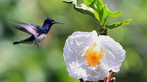Costa Rica: razones por las que tienes que viajar al país más feliz del mundo