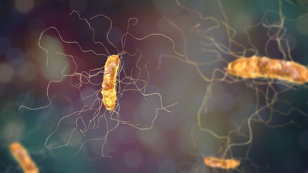 Foto: Bacteria responsable de causar botulismo. (iStock)