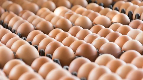 El truco para saber si un huevo se puede comer o está caducado
