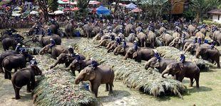 Post de Tus fotografías con los elefantes de Tailandia esconden una historia de abuso y hormonas