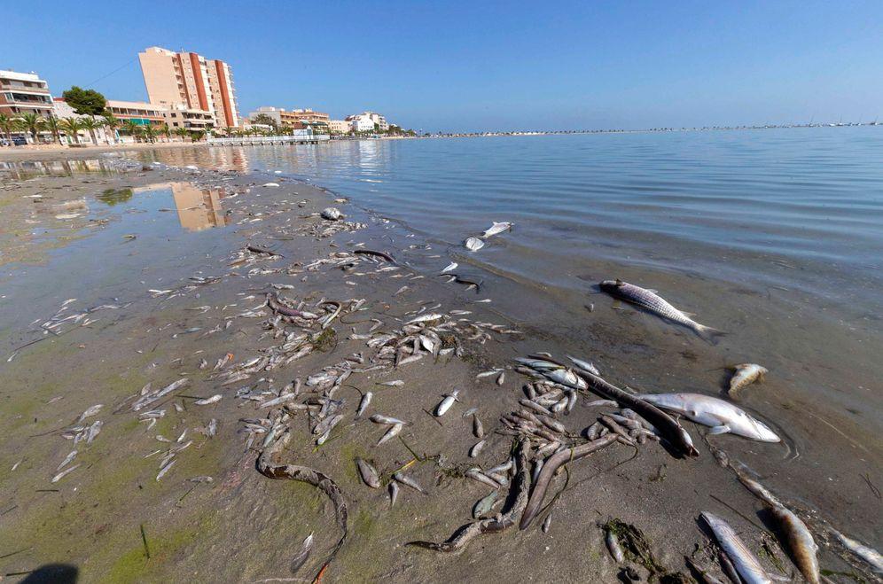 Foto: Miles de peces muertos en una playa del Mar Menor. (EFE)