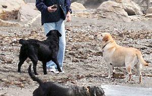 Foto: Aznar  pasea a sus perros en la playa