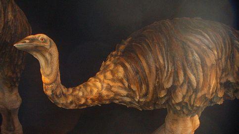 ¿Por qué se extinguió el Ave Elefante? El 'megapájaro' que vivía en Madagascar