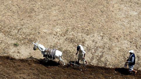 Agricultores yemeníes siembran semillas de trigo