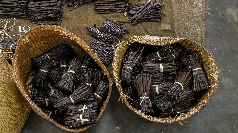 Ramas recopiladas en el proceso de manufacturación de la vainilla. (iStock)