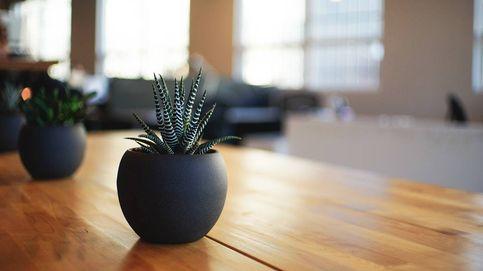 Macetas para decorar tu casa con plantas y lucirlas más