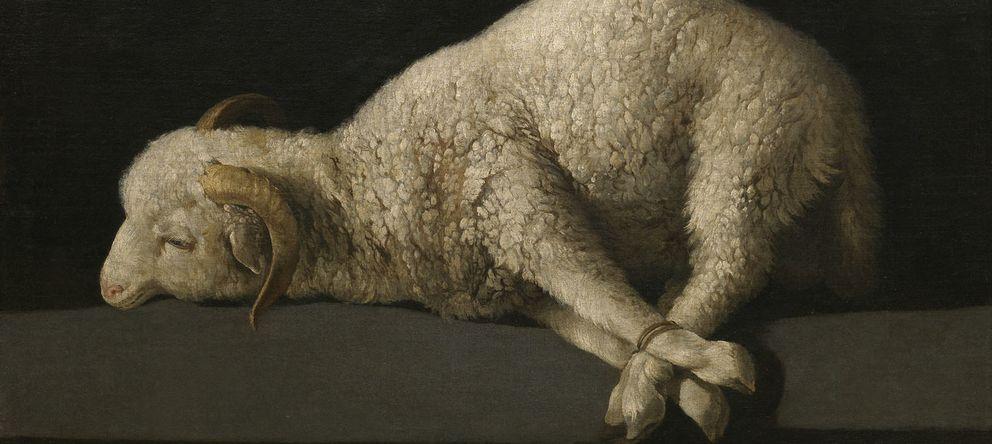 Foto: El famoso 'Agnus Dei' de Zurbarán, que El Prado compró en 1905 a la marquesa del Socorro.