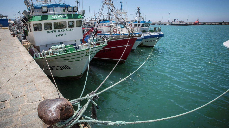 Las ONG exigen al Gobierno un mayor compromiso con la pesca sostenible